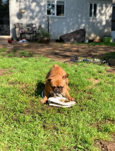 Outdoor Dog Water Fountain https://glammepet.com