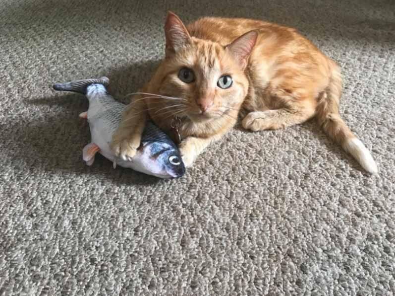 Dancing Fish Catnip Kicker Toy Cat Essentials Cat Toys Hot Sellers Glam Me Pet https://glammepet.com